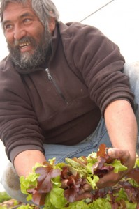 Don Bustos, co-director of the American Friends Service Committee and organic farmer with salad mix. Most of it will be sold to the school district to be served in kids' lunches. Photo: AFSC